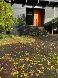 Leaves on the ground outside the entrance to PLUS QA's main office